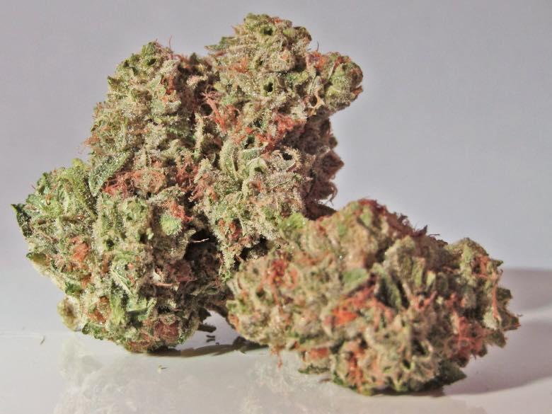 tricomi lattiginosi nel fiore di marijuana