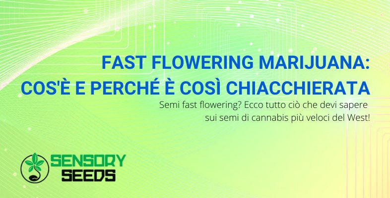 Fast flowering marijuana cos'è
