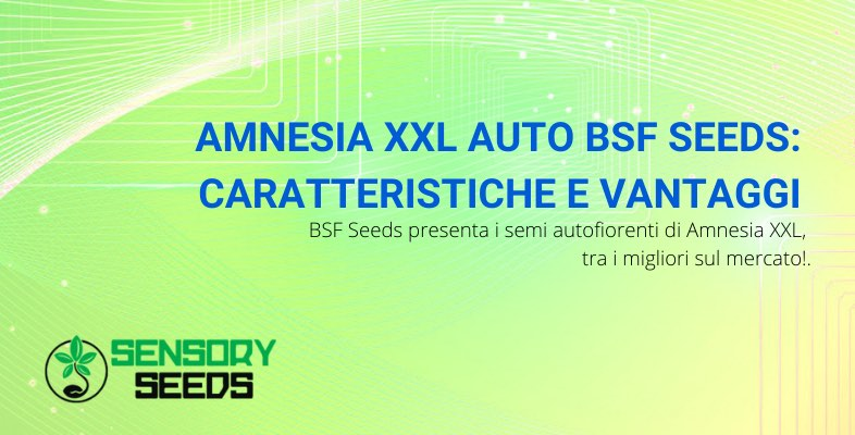 semi amnesia xxl auto caratteristiche