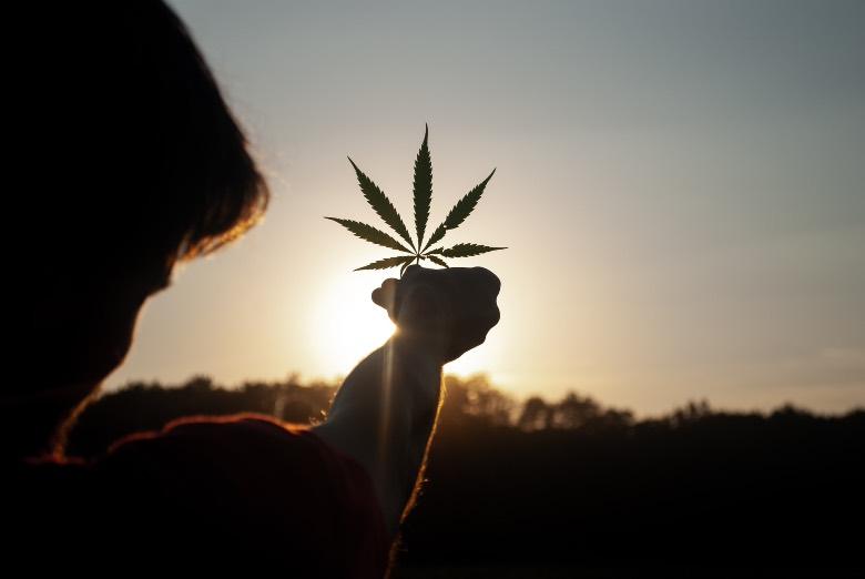 benefici terapeutici della cannabis