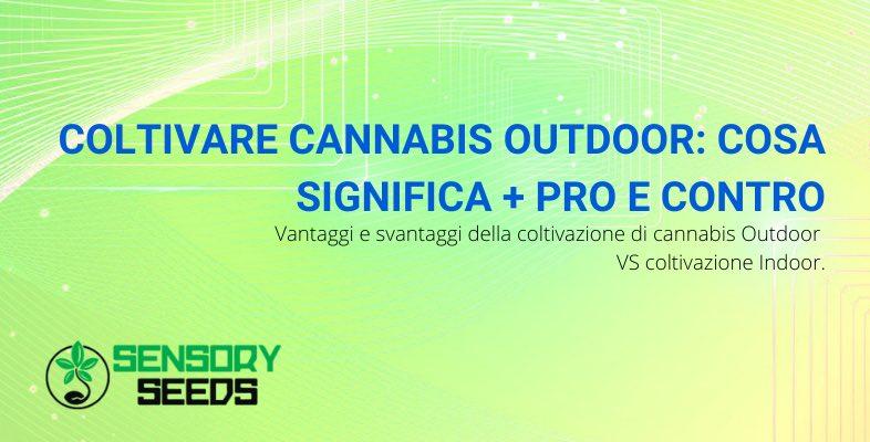 coltivare cannabis Outdoor pro e contro