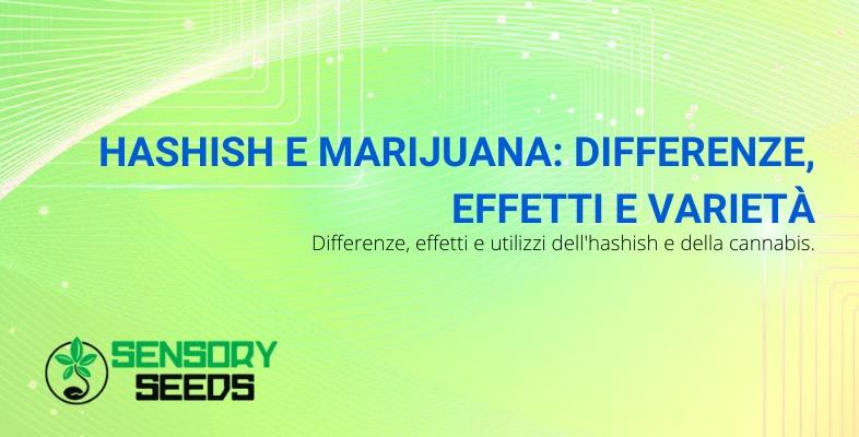 hashish e marijuana differenze e caratteristiche