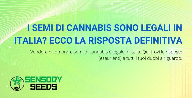 i semi di cannabis sono legali in Italia