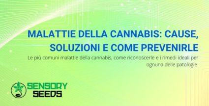 Malattie della cannabis
