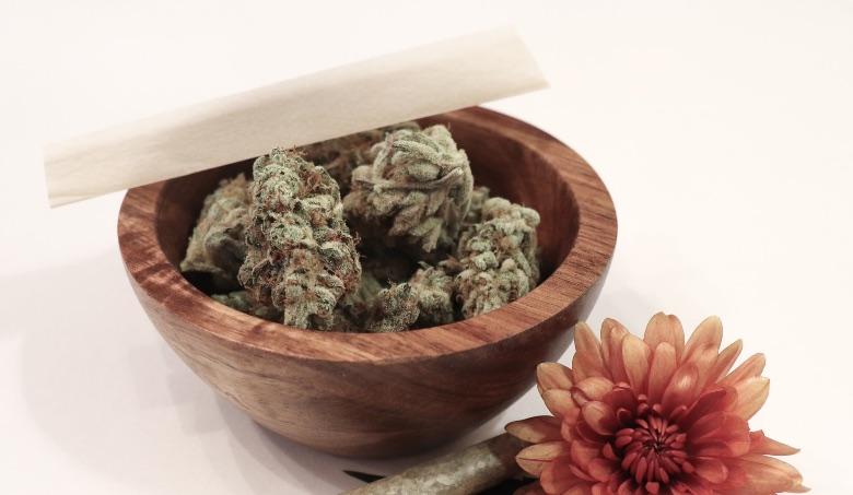 cannabis sinsemilla potente e aromatica