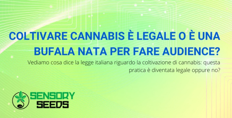 coltivare cannabis è legale