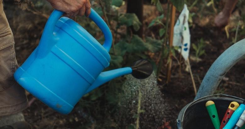 eccessiva irrigazione delle piante di cannabis porta a foglie gialle