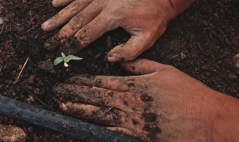 passaggio da plantula a fase vegetativa