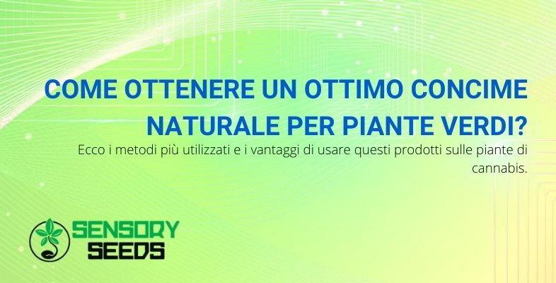 Come fare il concime naturale per piante verdi.