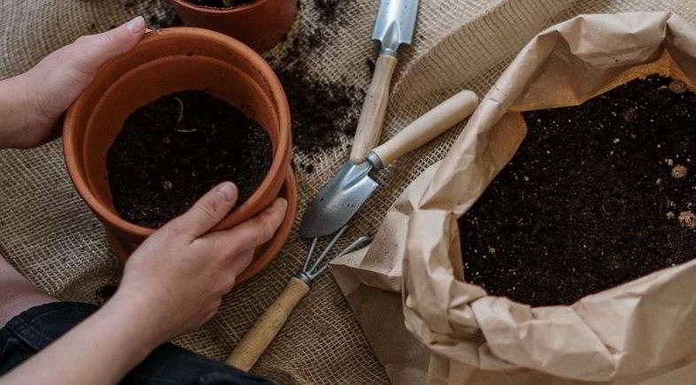 Come rinvasare una pianta nel modo corretto.
