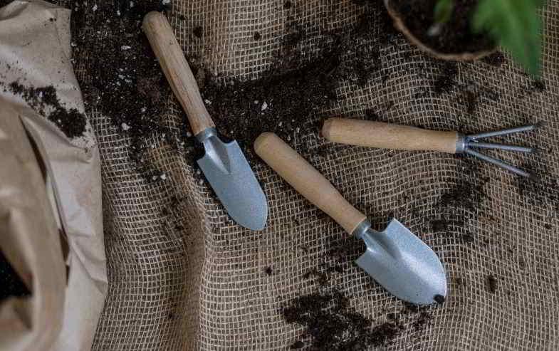 eccesso di fertilizzante nella canapa