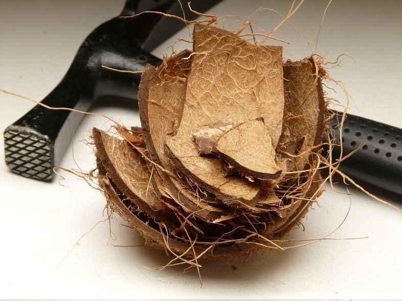 Fibra di cocco: che cos'è