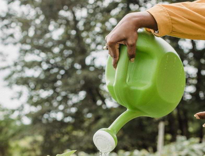 Pianta dalla crescita bloccata per troppa irrigazione.