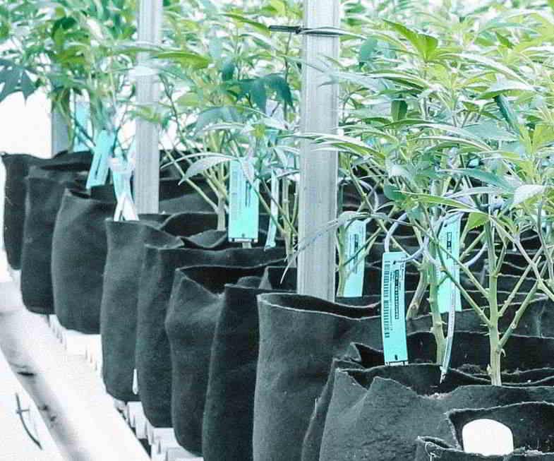 forma del vaso irregolare: contenitori in tessuto per cannabis