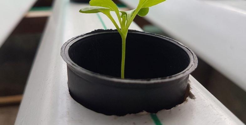 seminare senza terra e coltivare in idroponica