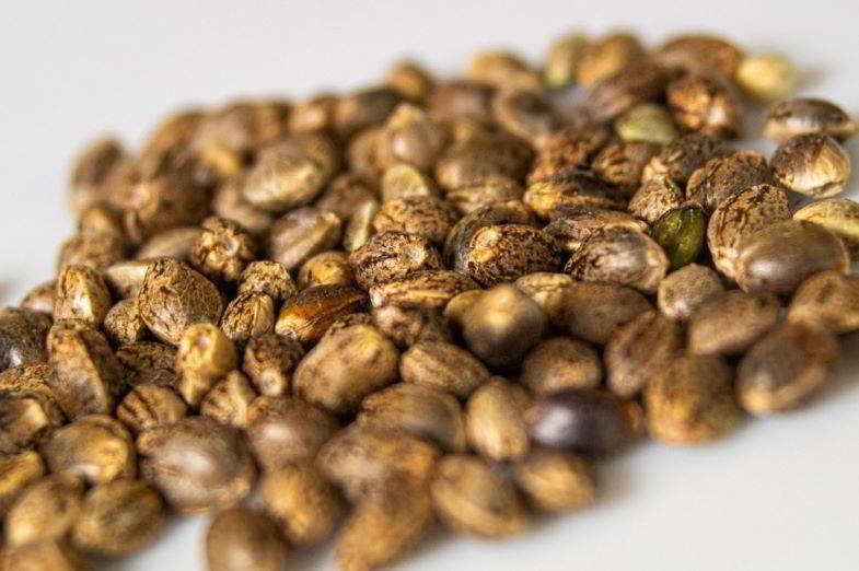 come capire se i semi di maria sono buoni