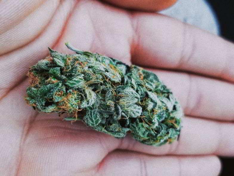 bud di cannabis