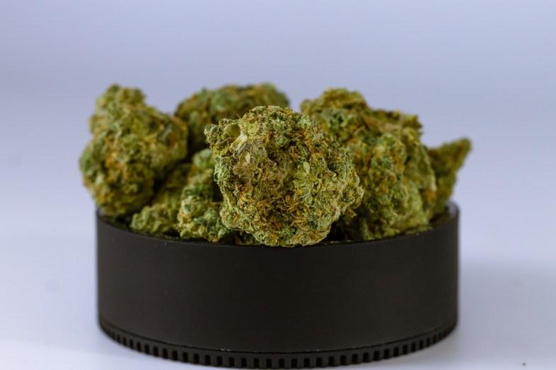Preannunciato futuro florido per commercianti di prodotti derivati dalla cannabis