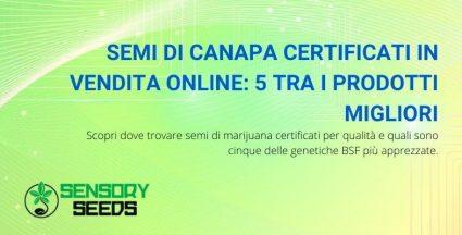 semi di canapa certificati in vendita